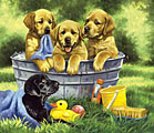 Squeaky Clean Jigsaw Puzzle