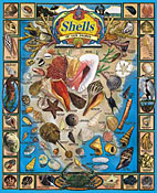 Shells of our Shores Jigsaw Puzzle